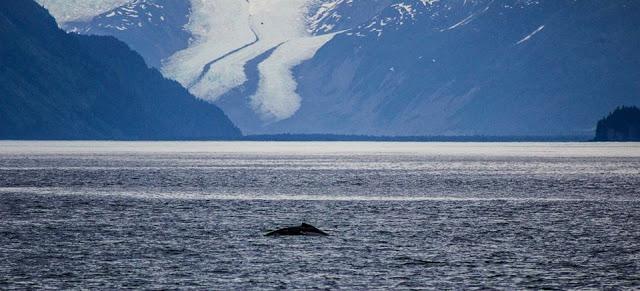 Cruisin' Kenai Fjords National Park