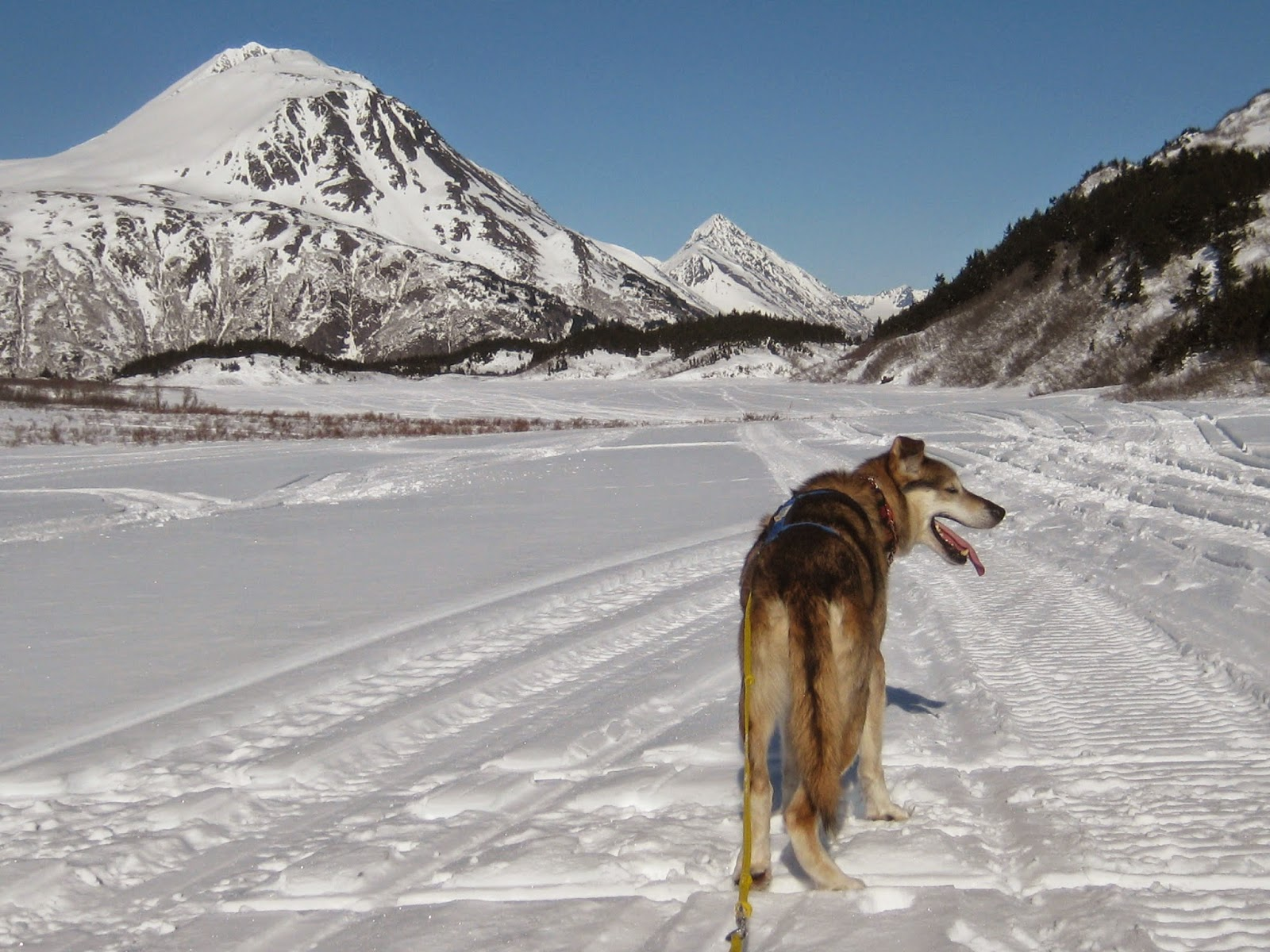 Miles of groomed, tracked and un-tracked Nordic, Back-country skiing and skijoring
